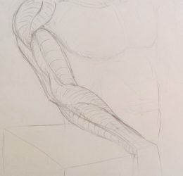 Croquis anatomie bras muscles homme